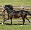 【父:イスラボニータほか(関西入厩)】2021年度キャロットクラブ募集確定馬の種牡馬別評価(18)【一口馬主】