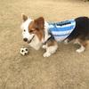 サッカー犬参上‼︎