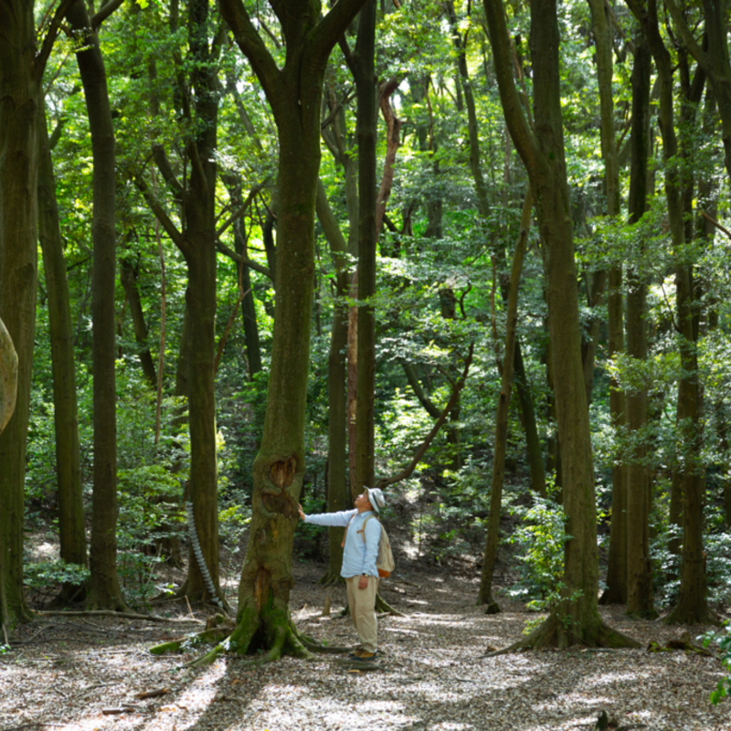 """""""森の案内人""""三浦豊さんと行く大人気の森ツアー 参加レポート!"""