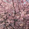 春の境川CR【自転車】