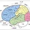 39 脳 #知性