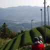 【お茶コラム】和束町の茶畑を美しく切り取る「へたっぴ写真家(@v0_0v______mk)」様の写真まとめ