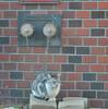 Tominon macro で撮る野良猫