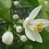 初夏の樹木の花2