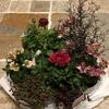 寄せ植えの花の選び方!悩んだときのたった4つのポイント!私流!
