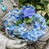 鎌倉のあじさい寺「明月院」明月院ブルーの紫陽花とやぐらとウサギ共和国。