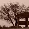 Eテレ「100分de名著 『維摩経』 第1回〜仏教思想の一大転換〜」を観て。 『維摩経』 って?