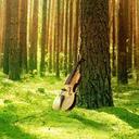 クラシック音楽のデザインと印刷|コンサートチラシ・ラボ