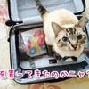 子連れハワイ旅行でお土産に私が買ったもの見せます!子ども用とバラマキ用