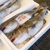 2018年1月15日 小浜漁港 お魚情報