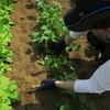 無農薬野菜作り 始めるまでの準備