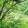チャツボミゴケ公園の池(仮称)(群馬県中之条)