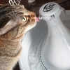 自動給水機を半年以上使ってみた感想とお手入れ方法【猫や犬におすすめ】