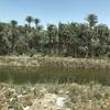【エジプト】旧首都 メンフィス