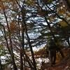 猟師K歯医者さんの山歩き「三嶺」 森の音
