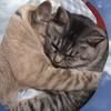 愛猫のんちゃんとの突然のお別れ