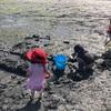 州立公園のビーチで潮干狩り★バタークラムと牡蠣、あさり