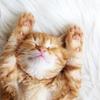 ブログに猫が多いのは何故なのか?