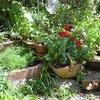 快晴の朝の庭
