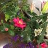 お庭の花・季節の木々とゆり