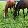 育成馬ブログ(日高①)