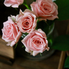 Rose&Rose