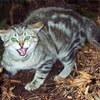 アニマルリペラーは猫被害対策に効果があるのか?徹底検証