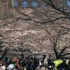 隅田川テラスとその周辺、そして浜町公園の桜