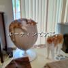 雨田甘夏、食べにくいです。【猫と食器とカリカリ事情】