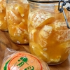 清見オレンジ酵母🍊