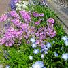 4月22日 アパートの花たち 〜Part.2 〜