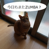 ZUMBAにおけるダイエット効果って・・・
