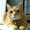 フェリシモ猫部さんでネオがハキハキ回答するの巻(そして裏話も・・・)