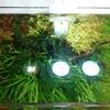 45cm水槽モサモサ