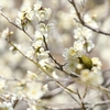 春色、春恋