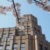 福井市 - vol.7 - お花見 さくら通り 福井地方裁判所