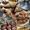 サザエよりツブ貝が美味しい?