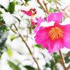 二十四節気 1月20日より大寒。大寒卵とおすすめハーブはシナモン