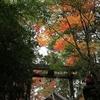 京都府宇治田原町「猿丸神社」柿・茶の花