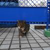 11月後半の #ねこ #cat #猫 その3