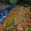 京都・花脊 - 谷川の散り紅葉