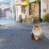 熱海のネコ  #filmphotography