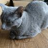 猫の餌の話:えっ、もう飽きたの?