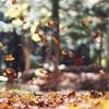 秋もキレイになりたい人に読んでもらいたい!