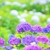 引き寄せ実践報告【36日目】幸せな「夢」を見た