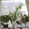観葉植物・紅葉