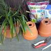 なまけものと鉢ものの植え替え