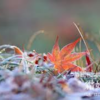 二十四節気七十二候 「霜降 霜始降」(2017/10/23)