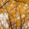 2017  紅葉写真         国営武蔵丘陵森林公園