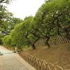 初四国、香川旅行:静かに雨の降るなか中栗林公園をお散歩